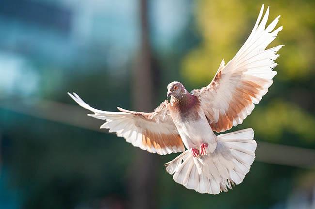 Chiêm bao thấy chim uyên ương