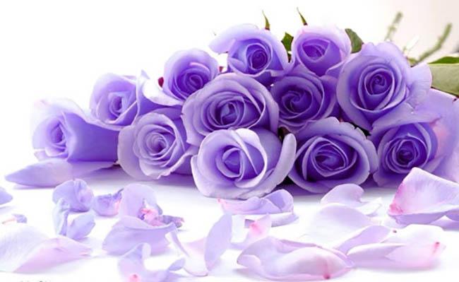 Mơ thấy hoa đánh con gì?